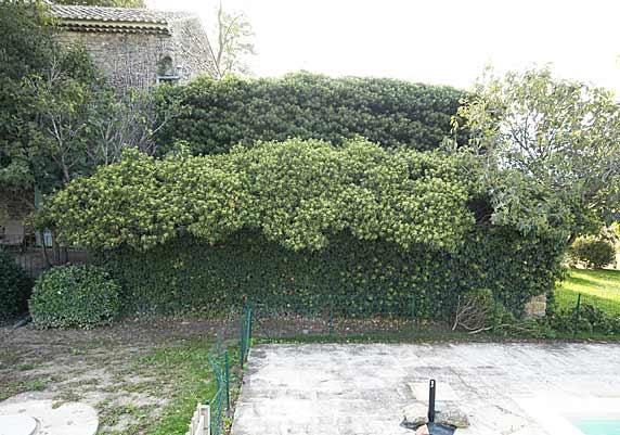 Ivyhouse