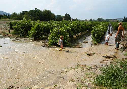 Vineyardriver